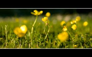 Flower wallpaper 1680x1050 by Ramzon