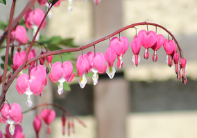 Bleeding Hearts by S4MMY4RT
