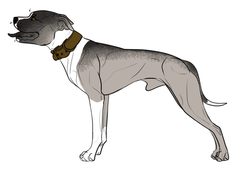Pitbull Puppy Adoptable 03 by CascadiaRiverKennels
