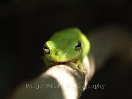 Tree Frog by PaigeMills