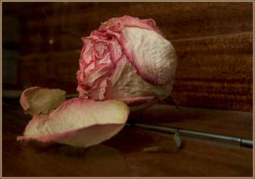 Age of a rose by mirator