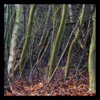 An Array of Tree Trunks by neoweb