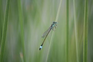 Dragonfly in Green by Kaldrax