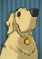 Finn the Golden Retreiver by poopysocks