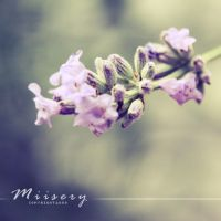:: Lavender :: by miisery