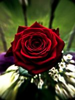 rose by MiscReant1512
