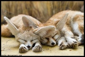 sleepers by morho