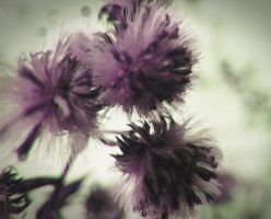 Purple thistle flower by VasiDgallery