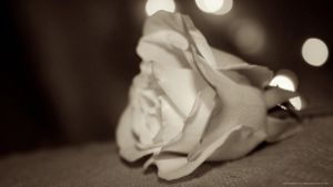 Rose and Bokeh by CayaStrife