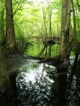The Swamp by mfr751