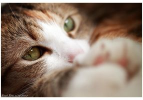my cat by Njuta