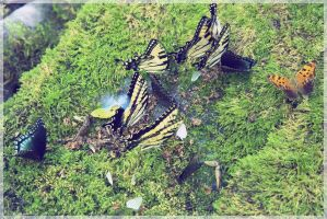 Butterfly by thanhsangdml