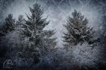 Snow-covered Trees by MD-Arts