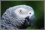 ... Eye of the Parrot ... by JMckey
