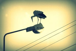 The stork by elicenia