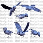 Bird Stock Pack 3 by Shoofly-Stock