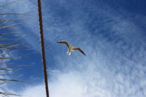 Seagul by syrus
