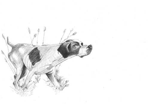 English pointer by AnyaPeregrinArt