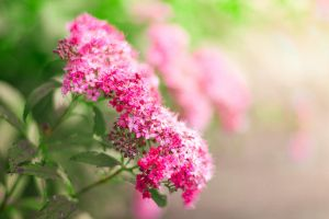 Day Thirty-Eight - Pink Flower by Lady-Tori