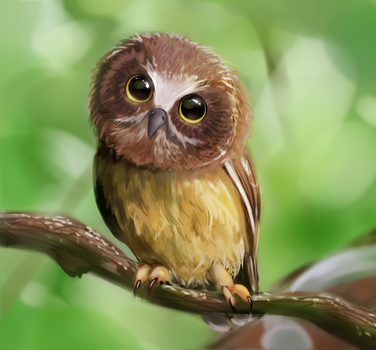 Owl Study by Moossey