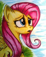 Fluttershy Why by Tomek2289