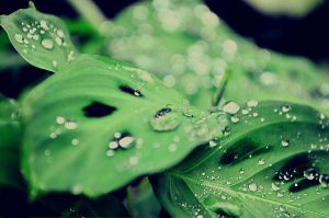 Morning dew by cazt1811
