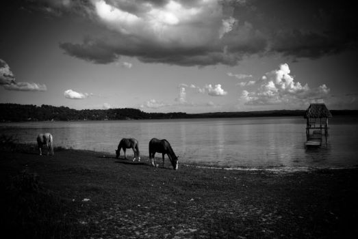 Lake Horses by SantiBilly