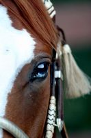 window to the soul by urban-cowgirl81