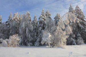 Frost and sun by Hudojnica