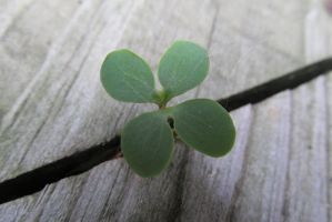 Luck from the Crevices by Toderico
