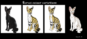 Serval Colour Variations by Han-Wik
