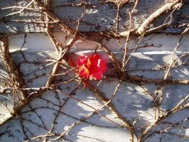 Wall Flower Vine by ElectraSinclair