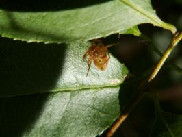 Resting Spider by BloodiedGypsy