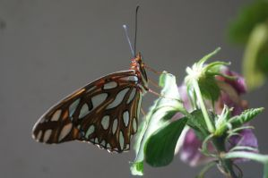Butterfly 1 by Crisss47