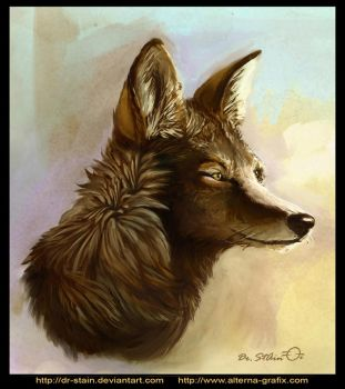Canis latrans by Dr-Stain