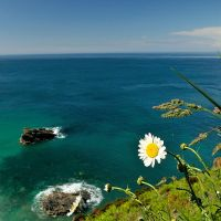 Clifftop Daisies by midlander1231