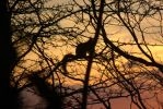 sunset squirrel by L-A-Addams-Art