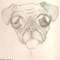 Wednesday the Pug by joebananaz