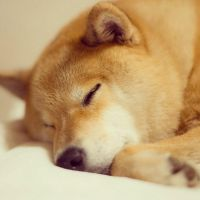 Sleepy by marustagram