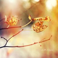 ..: kiss the sun :.. by Moth-called-Marigold