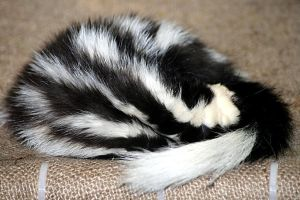 Sleeping Skunk by JaimeSkelton