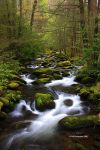 Smoky Mountain Stream by TRBPhotographyLLC