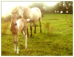Mare and Foal - Colour by RiniMac