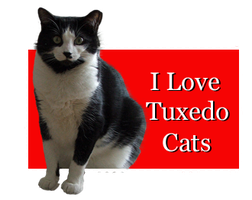 I Love Tuxedo Cats by Loulou13
