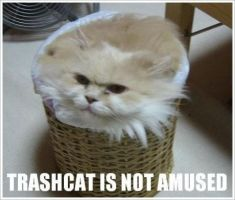 Trashcat ain't amused by koker111111111111111