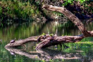Terrapin Backwater 0931a by Daveinwilton