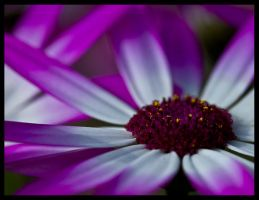 ultra violet by justfrog
