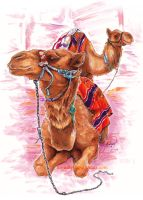 Camels by BooYeh