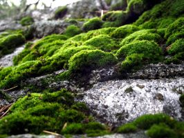 moss stock 05 by hp-abrasion