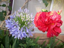 Blue and Red  flowers by Pansy4Lyf